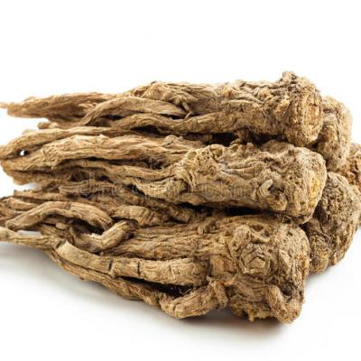 Angelica sinensis traditional chinese medicine commonly known as dong quai female ginseng herb family apiaceae 39378748