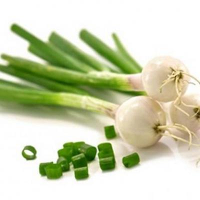 Cebolla verde 1