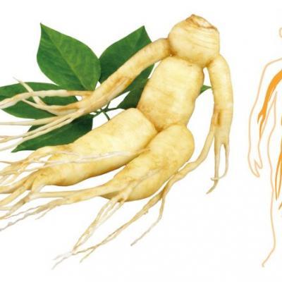 Beneficios de la raíz de ginseng 1 e1521629684108