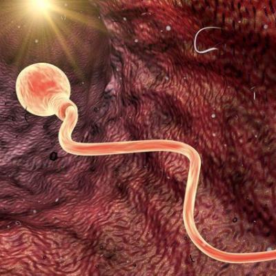 640 sperme