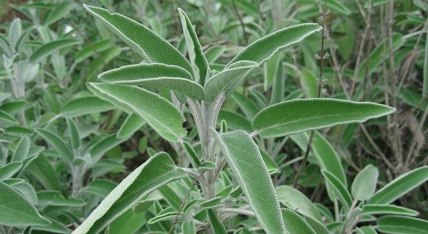 8 herbes pour ameliorer efficacement la fertilite masculine