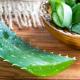 Guérir du diabète sucré : traitement naturel à base d'aloe vera