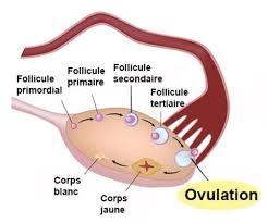 Anovulation