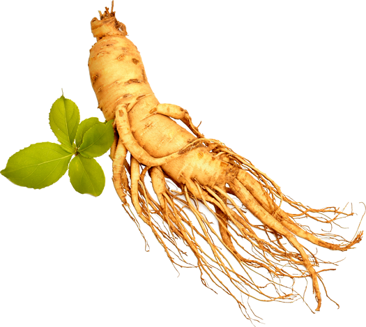 Effect of ginseng on testicle size and testosterone