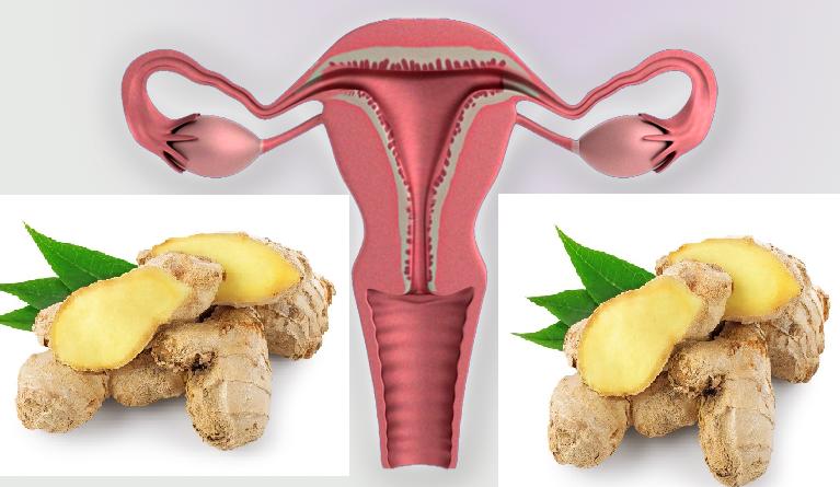 Gingembre pour nettoyer l uterus