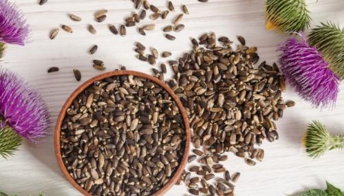 Les meilleures plantes contre la steatose hepatique