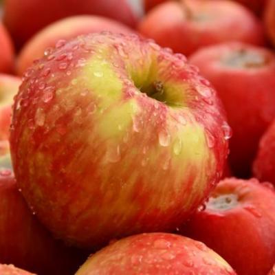Les pommes guerissent la steatose hepatique