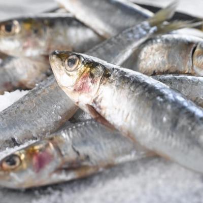 Les sardines soignent les troubles de la memoire