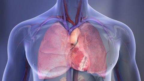 Marrube et son action sur l arythmie cardiaque