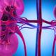 Le lupus rénal : explication et traitement naturel